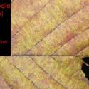 """Nanodio — """"Ulu"""" Cover Art"""