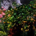 Violeta Päivänkakkara — kukkia Cover Art