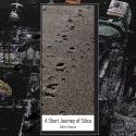 Dallas Simpson — A Short Journey Of Silica Cover Art