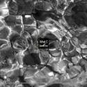 Slavek Kwi — Uchat C Cover Art